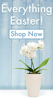 Everything Easter for your Church Shop Now